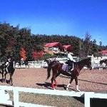 乗馬センター